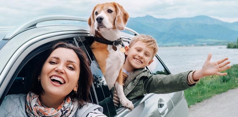 Comment Résilier Une Assurance Auto De La Macif